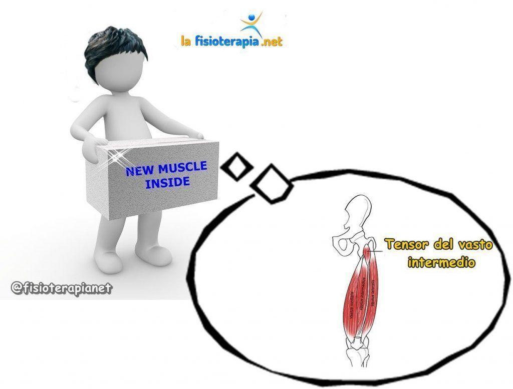 Nuevo músculo descubierto