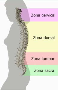 dolor de espalda por zonas