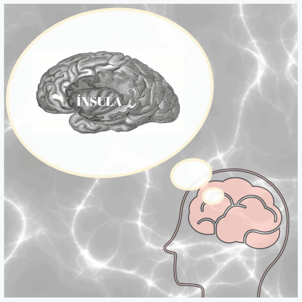Parte del cerebro para mantener el estado de salud