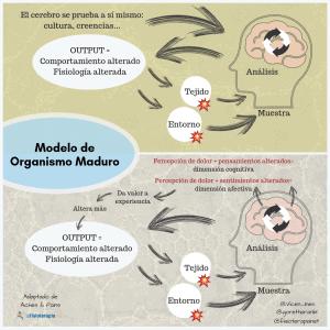 Dimension cognitiva y afectiva