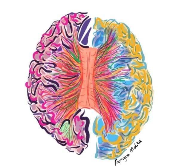 blog de neurofisiología